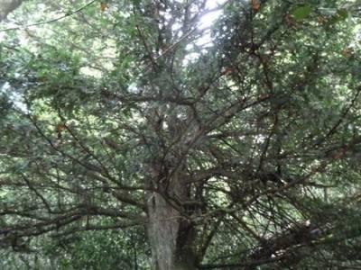 Cañones y nacimento del Ebro - Monte Hijedo;excursion sierra madrid;rutas de la pedriza